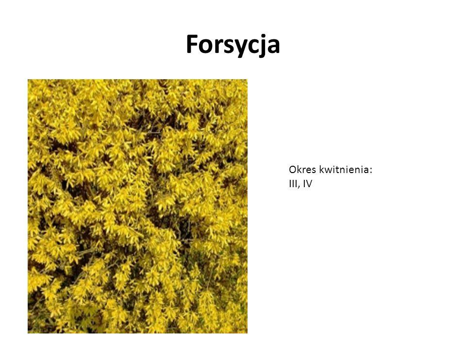 Ciemiernik cuchnący okres kwitnienia: II, III, IV, V, VI