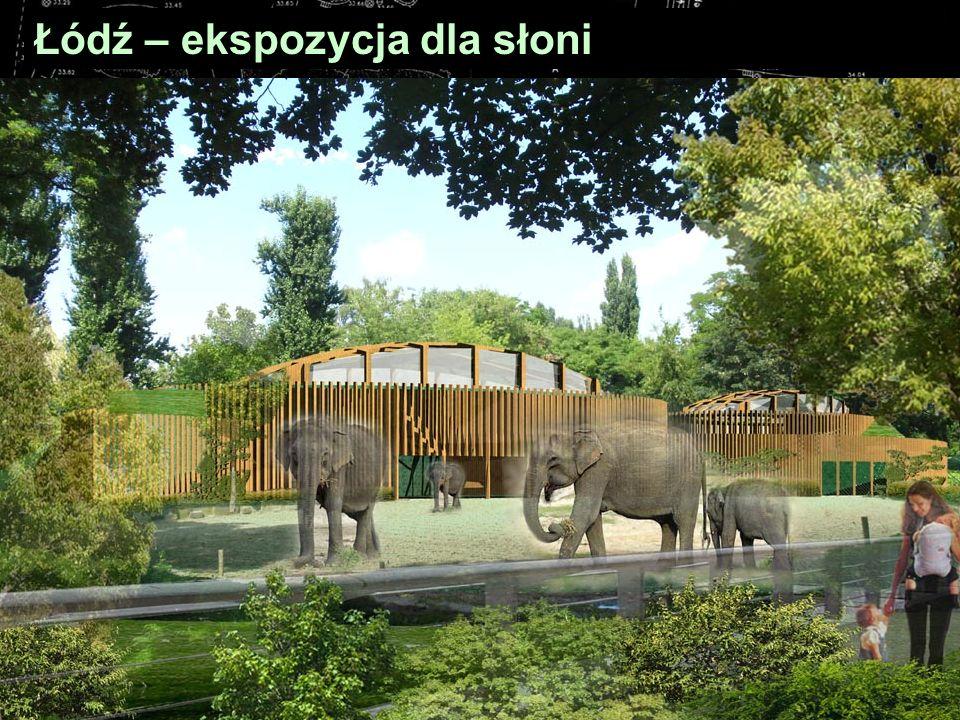 Łódź – ekspozycja dla słoni