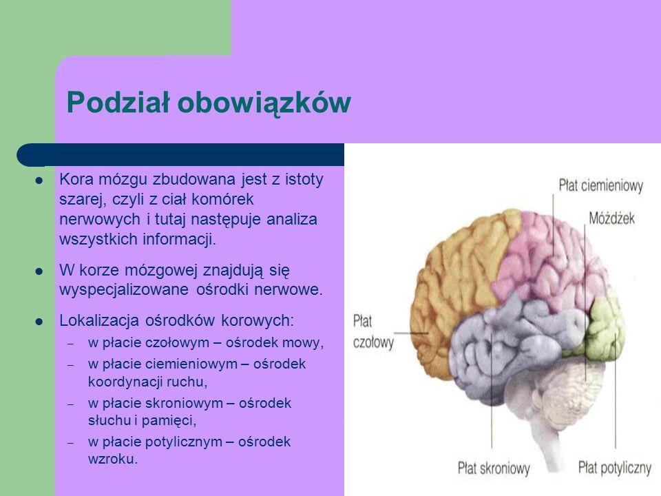 Podział obowiązków Kora mózgu zbudowana jest z istoty szarej, czyli z ciał komórek nerwowych i tutaj następuje analiza wszystkich informacji.