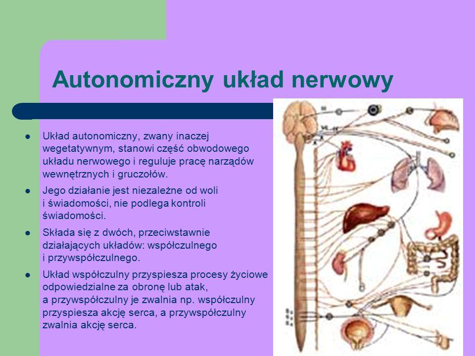 Autonomiczny układ nerwowy Układ autonomiczny, zwany inaczej wegetatywnym, stanowi część obwodowego układu nerwowego i reguluje pracę narządów wewnętrznych i gruczołów.