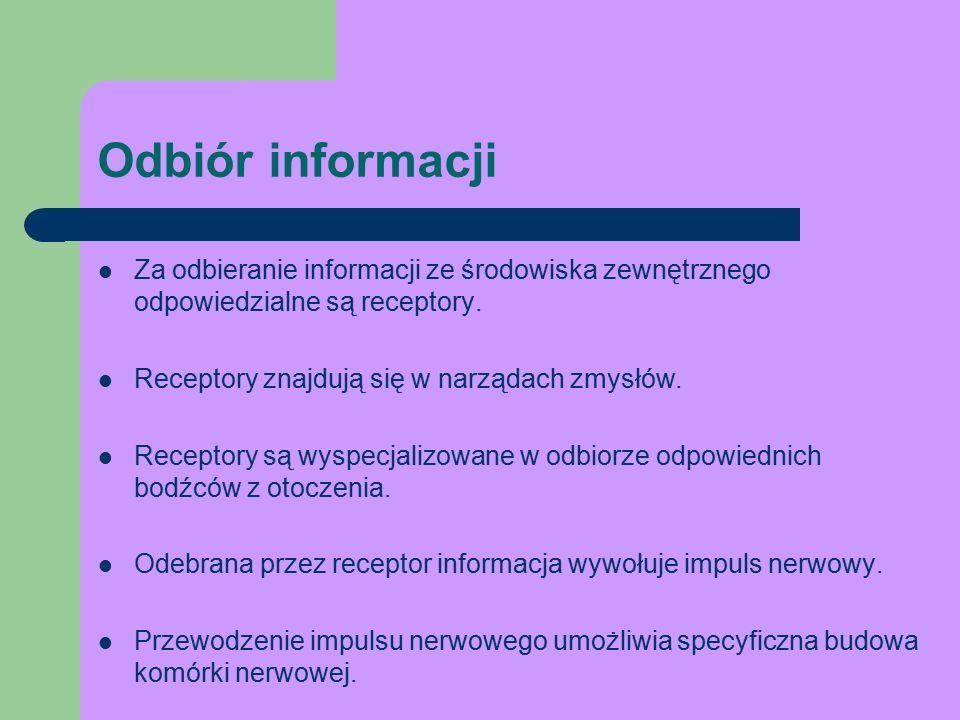 Odbiór informacji Za odbieranie informacji ze środowiska zewnętrznego odpowiedzialne są receptory.