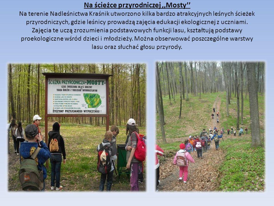 Na ścieżce przyrodniczej,,Mosty'' Na terenie Nadleśnictwa Kraśnik utworzono kilka bardzo atrakcyjnych leśnych ścieżek przyrodniczych, gdzie leśnicy prowadzą zajęcia edukacji ekologicznej z uczniami.