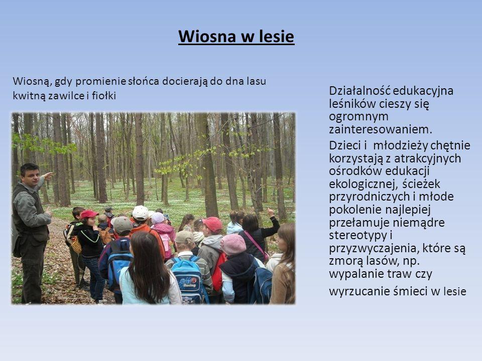 Wiosna w lesie Działalność edukacyjna leśników cieszy się ogromnym zainteresowaniem. Dzieci i młodzieży chętnie korzystają z atrakcyjnych ośrodków edu