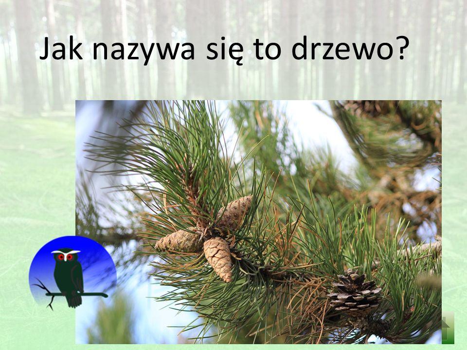 Jak nazywa się to drzewo