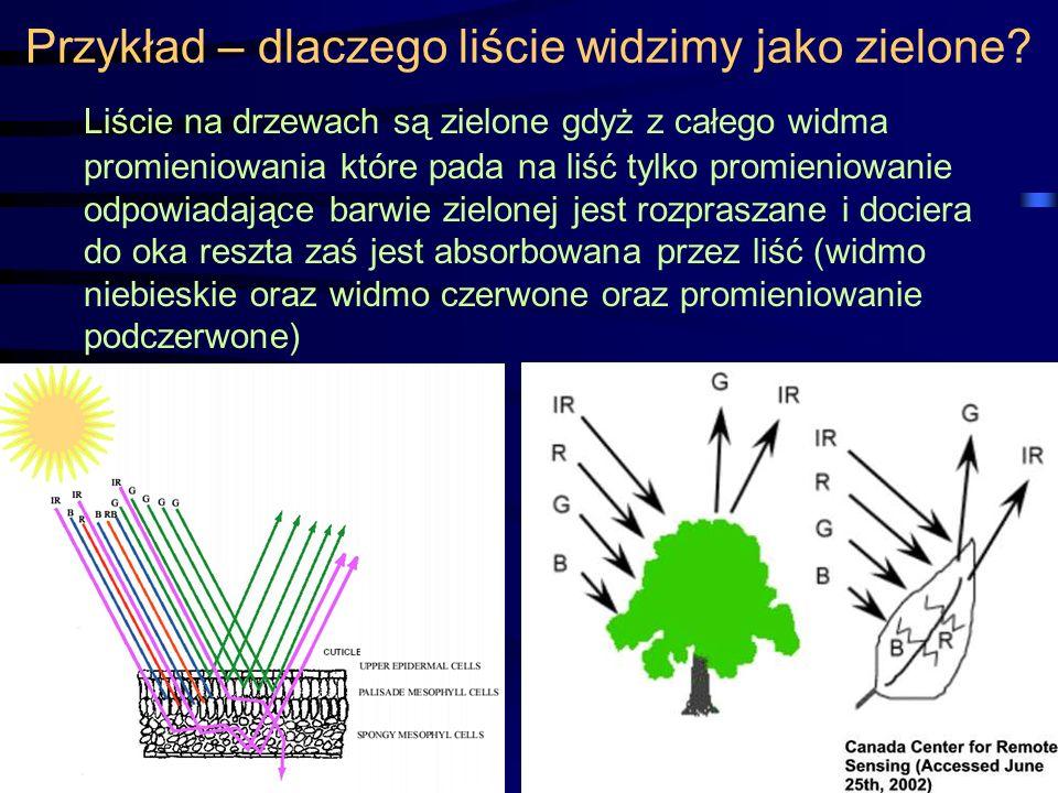 Przykład – dlaczego liście widzimy jako zielone? Liście na drzewach są zielone gdyż z całego widma promieniowania które pada na liść tylko promieniowa