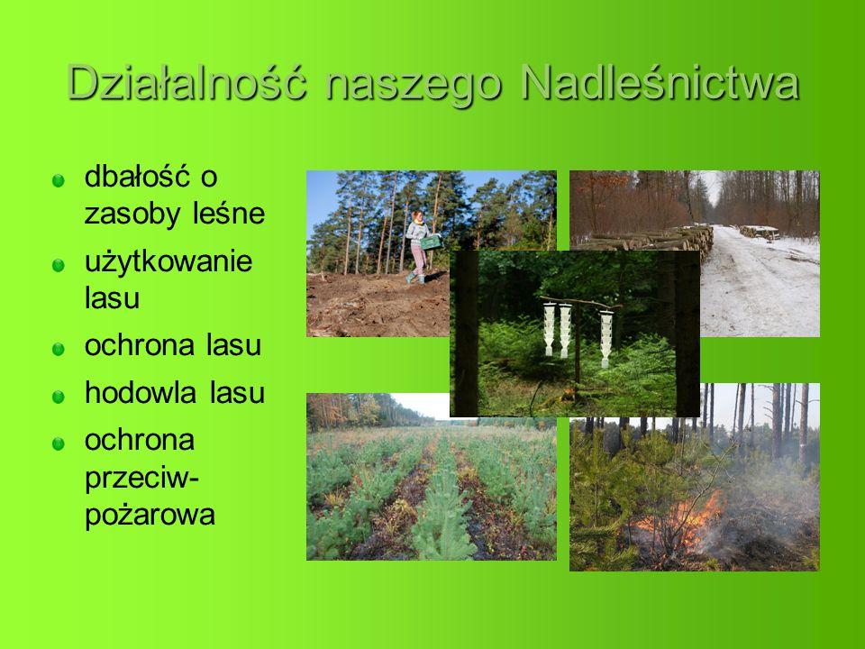 Działalność naszego Nadleśnictwa dbałość o zasoby leśne użytkowanie lasu ochrona lasu hodowla lasu ochrona przeciw- pożarowa