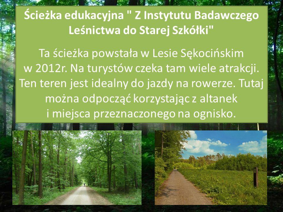 Ścieżka edukacyjna Z Instytutu Badawczego Leśnictwa do Starej Szkółki Ta ścieżka powstała w Lesie Sękocińskim w 2012r.