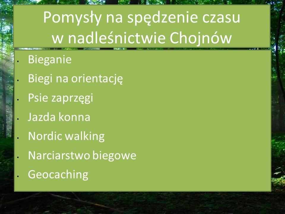 Pomysły na spędzenie czasu w nadleśnictwie Chojnów Bieganie Biegi na orientację Psie zaprzęgi Jazda konna Nordic walking Narciarstwo biegowe Geocaching