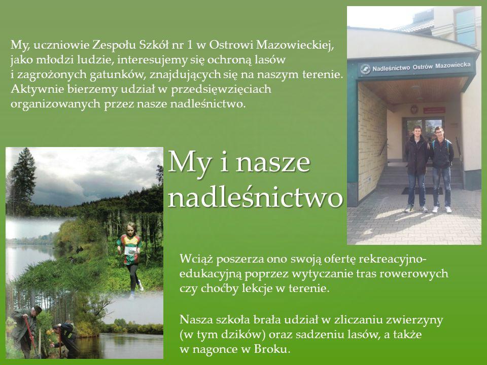 My i nasze nadleśnictwo My, uczniowie Zespołu Szkół nr 1 w Ostrowi Mazowieckiej, jako młodzi ludzie, interesujemy się ochroną lasów i zagrożonych gatunków, znajdujących się na naszym terenie.