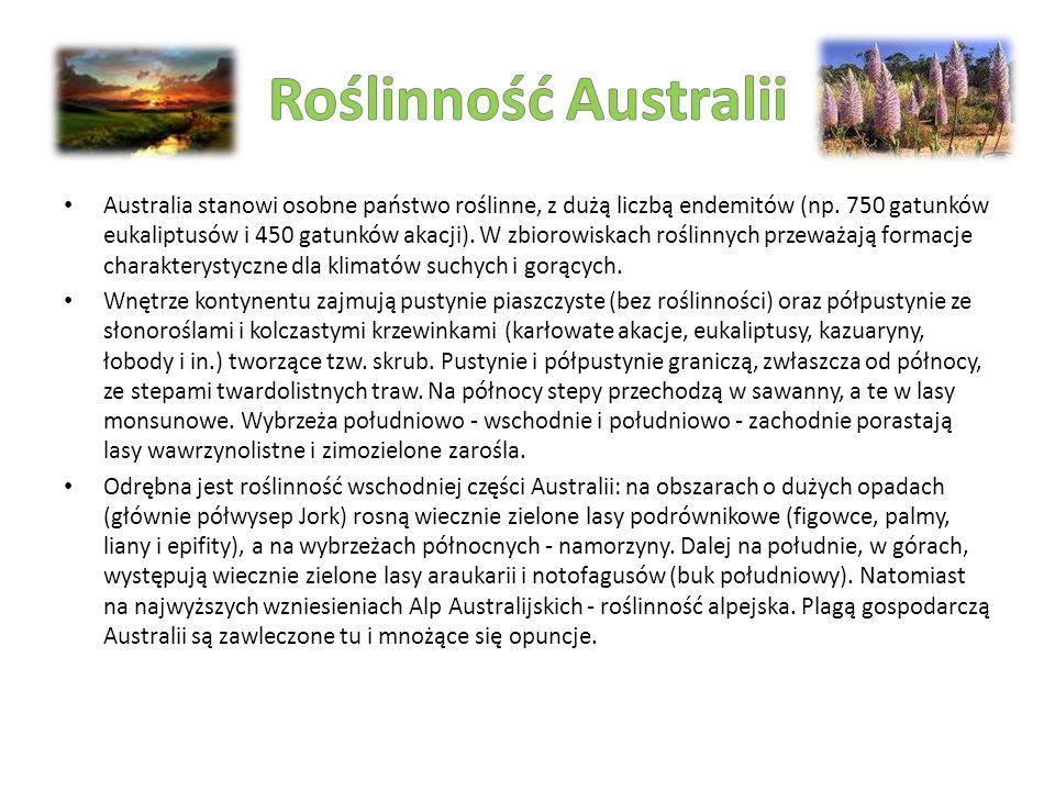 Australia stanowi osobne państwo roślinne, z dużą liczbą endemitów (np. 750 gatunków eukaliptusów i 450 gatunków akacji). W zbiorowiskach roślinnych p