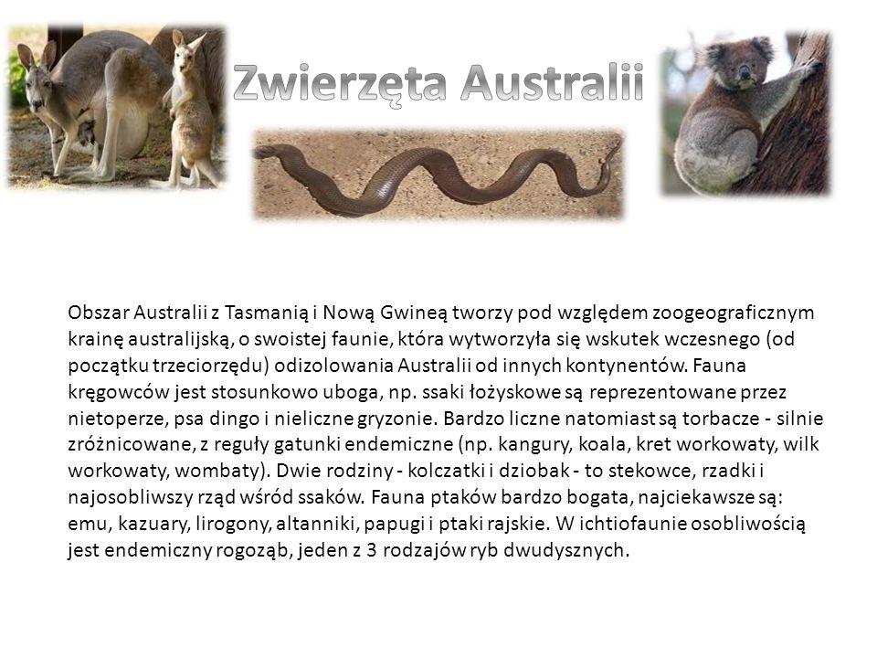 Obszar Australii z Tasmanią i Nową Gwineą tworzy pod względem zoogeograficznym krainę australijską, o swoistej faunie, która wytworzyła się wskutek wc