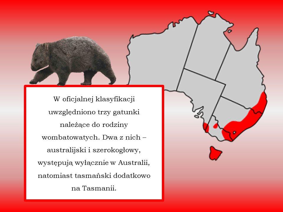 W oficjalnej klasyfikacji uwzględniono trzy gatunki należące do rodziny wombatowatych. Dwa z nich – australijski i szerokogłowy, występują wyłącznie w