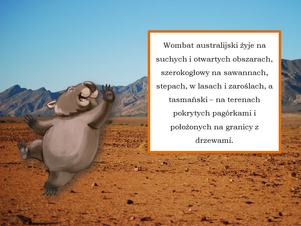 Wombat australijski żyje na suchych i otwartych obszarach, szerokogłowy na sawannach, stepach, w lasach i zaroślach, a tasmański – na terenach pokrytych pagórkami i położonych na granicy z drzewami.