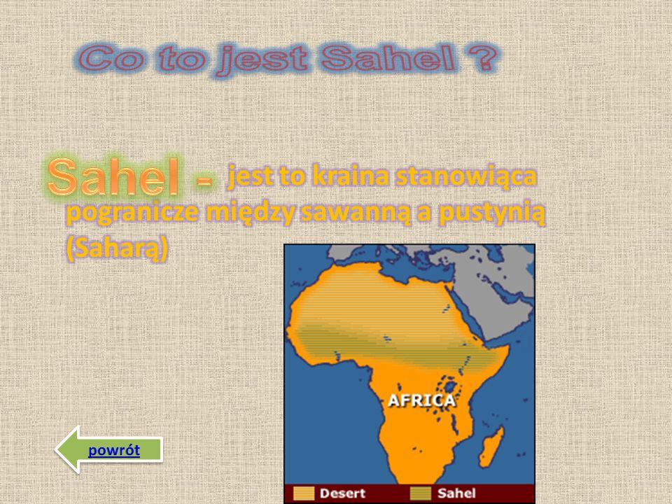 Sawanna - obszar porośnięty trawami i pojedynczymi drzewami rosnącymi rzadko takimi jak: *baobaby *akacje *palmy