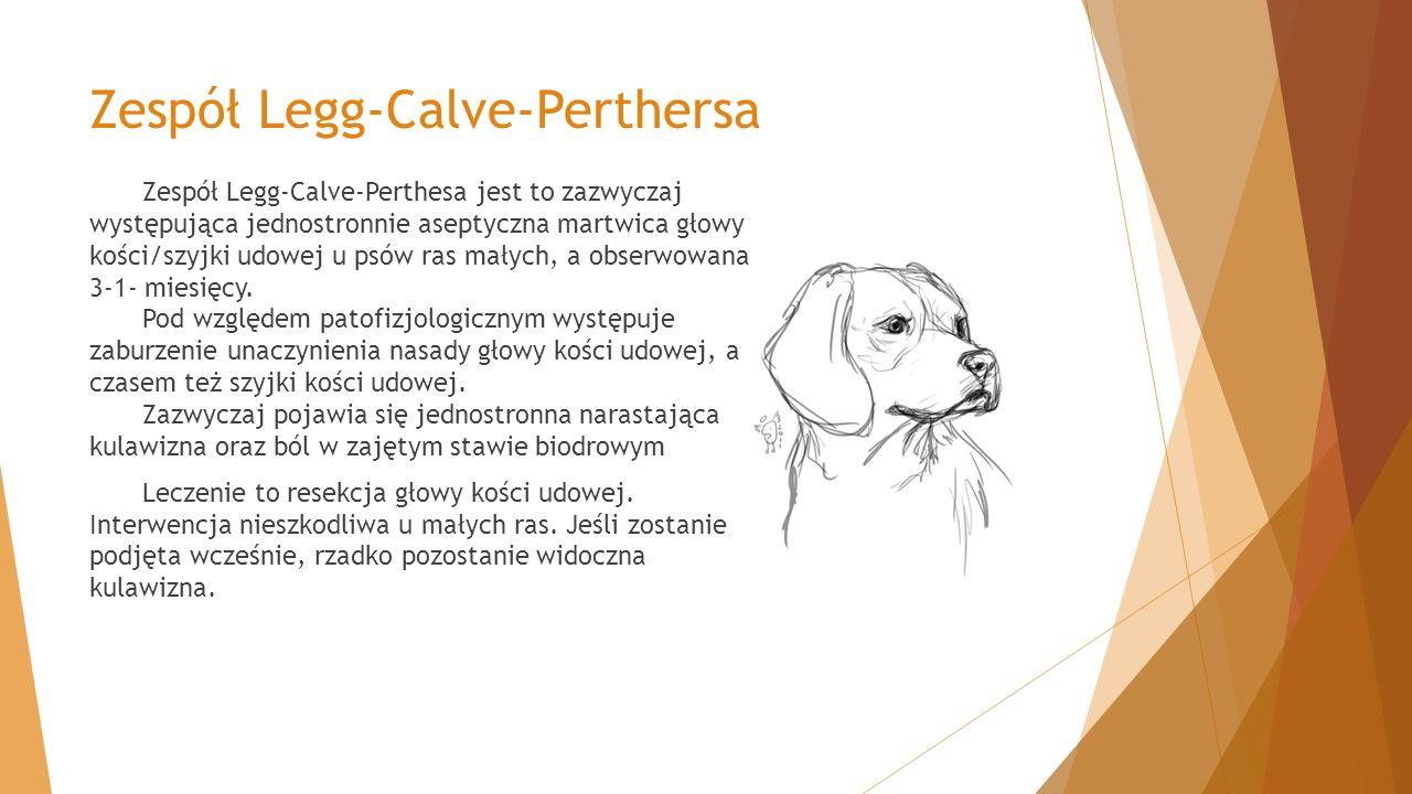 Zespół Legg-Calve-Perthersa Zespół Legg-Calve-Perthesa jest to zazwyczaj występująca jednostronnie aseptyczna martwica głowy kości/szyjki udowej u psó