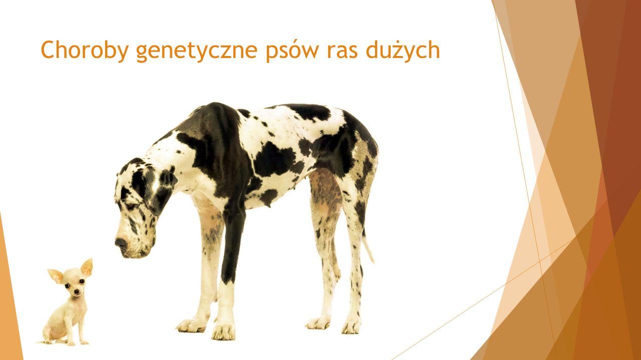 Choroby genetyczne psów ras dużych