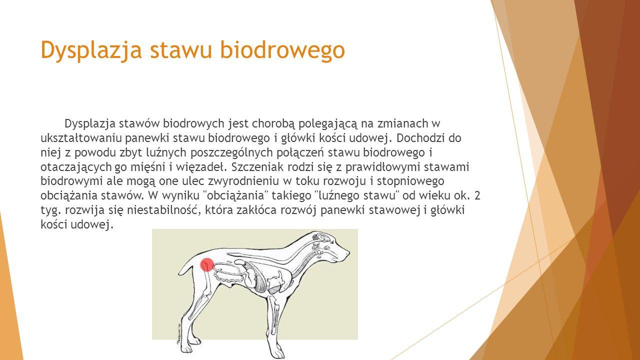 Dysplazja stawu biodrowego Dysplazja stawów biodrowych jest chorobą polegającą na zmianach w ukształtowaniu panewki stawu biodrowego i główki kości ud