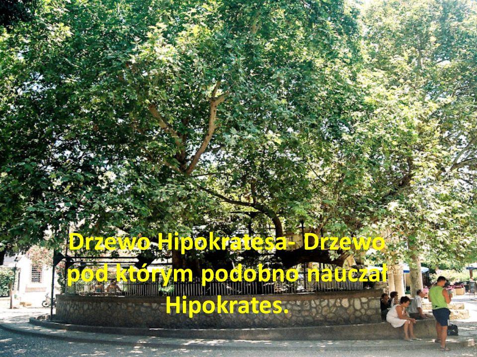 Drzewo Hipokratesa- Drzewo pod którym podobno nauczał Hipokrates.