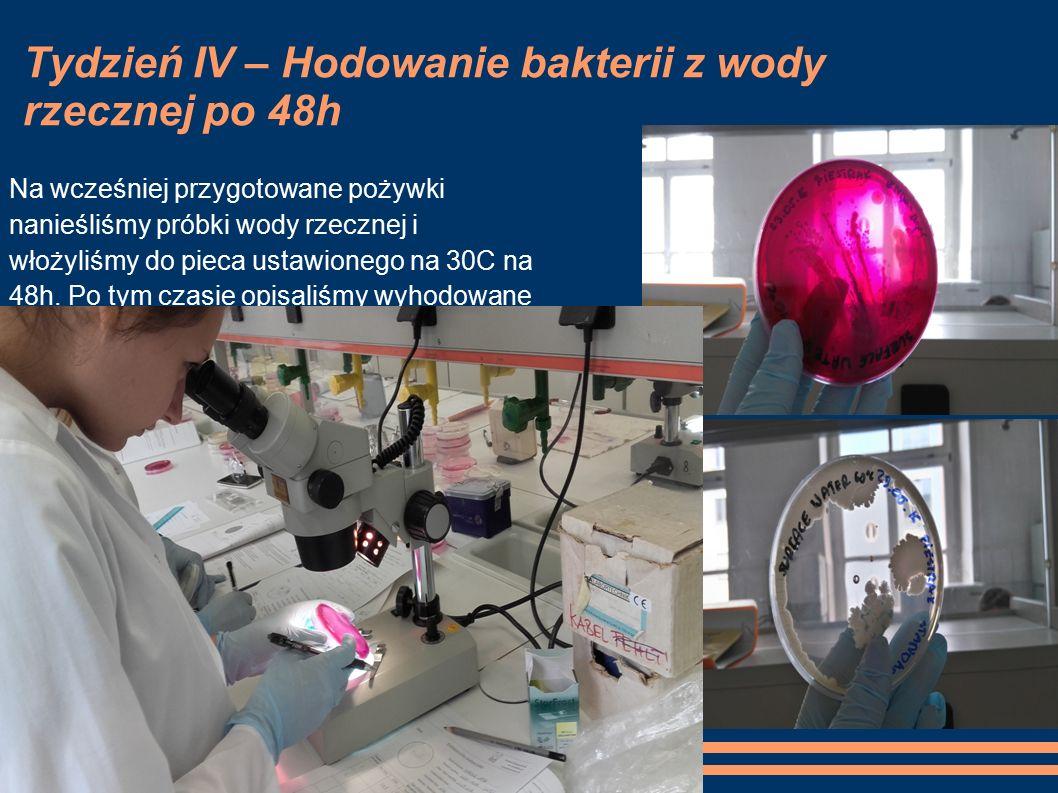Tydzień IV – Hodowanie bakterii z wody rzecznej po 48h Na wcześniej przygotowane pożywki nanieśliśmy próbki wody rzecznej i włożyliśmy do pieca ustawionego na 30C na 48h.