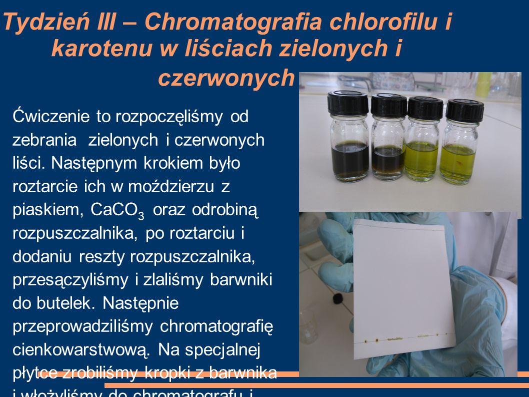 Tydzień III – Chromatografia chlorofilu i karotenu w liściach zielonych i czerwonych Ćwiczenie to rozpoczęliśmy od zebrania zielonych i czerwonych liś