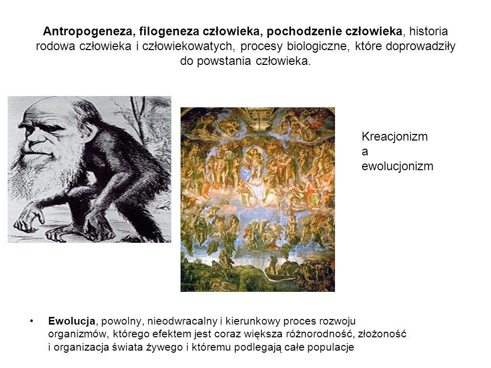 Antropogeneza, filogeneza człowieka, pochodzenie człowieka, historia rodowa człowieka i człowiekowatych, procesy biologiczne, które doprowadziły do powstania człowieka.