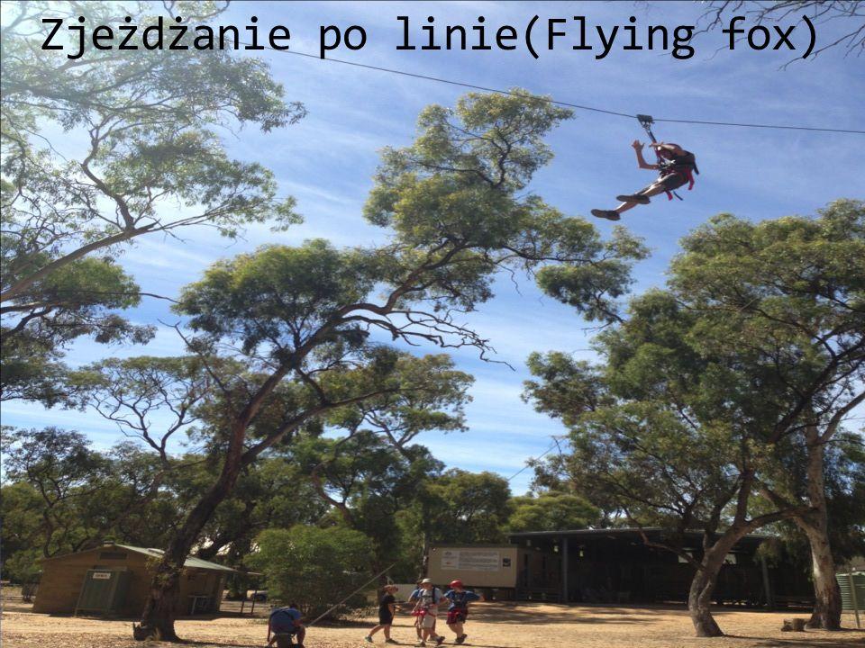 Zjeżdżanie po linie(Flying fox)