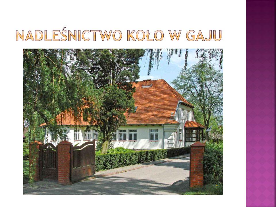  Nadleśnictwo Koło jako samodzielna jednostka administracyjna powstała po I Wojnie Światowej z carskich lasów rządowych oraz dawnych lasów donacyjnych.