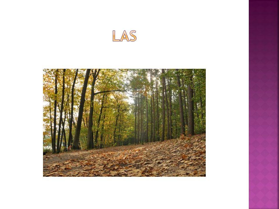 Lasy Nadleśnictwa Koło stanowią powierzchnię ponad 11 tys.