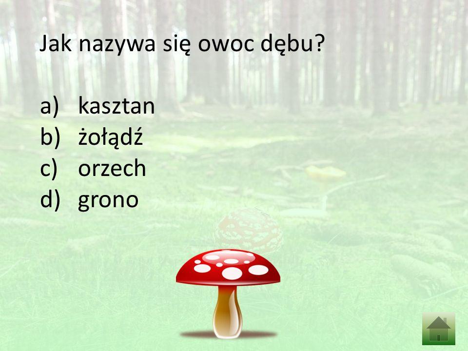 Jak nazywa się owoc dębu? a)kasztan b)żołądź c)orzech d)grono