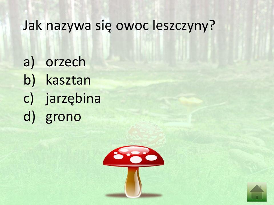 Jak nazywa się owoc leszczyny? a)orzech b)kasztan c)jarzębina d)grono