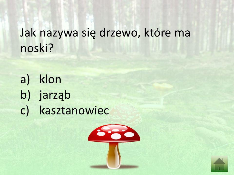 Jak nazywa się drzewo, które ma noski? a)klon b)jarząb c)kasztanowiec