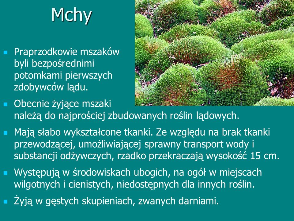 Mchy Praprzodkowie mszaków byli bezpośrednimi potomkami pierwszych zdobywców lądu. Obecnie żyjące mszaki należą do najprościej zbudowanych roślin lądo