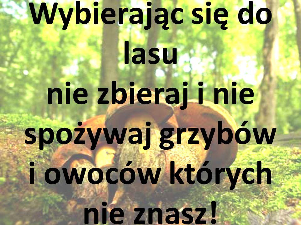 Wybierając się do lasu nie zbieraj i nie spożywaj grzybów i owoców których nie znasz!