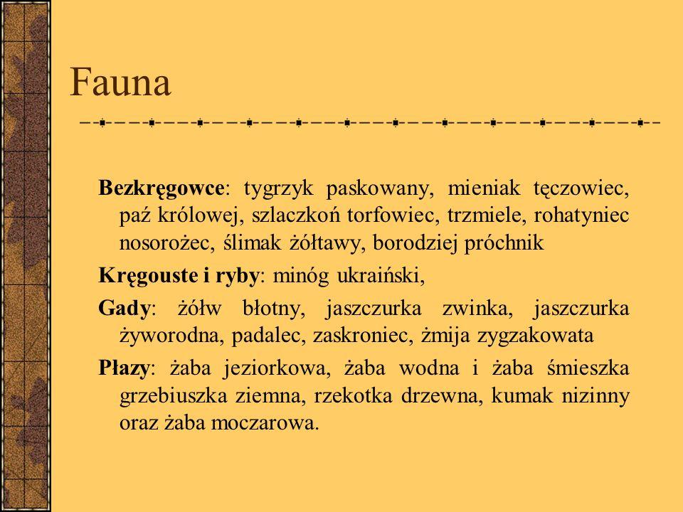 Fauna Bezkręgowce: tygrzyk paskowany, mieniak tęczowiec, paź królowej, szlaczkoń torfowiec, trzmiele, rohatyniec nosorożec, ślimak żółtawy, borodziej próchnik Kręgouste i ryby: minóg ukraiński, Gady: żółw błotny, jaszczurka zwinka, jaszczurka żyworodna, padalec, zaskroniec, żmija zygzakowata Płazy: żaba jeziorkowa, żaba wodna i żaba śmieszka grzebiuszka ziemna, rzekotka drzewna, kumak nizinny oraz żaba moczarowa.