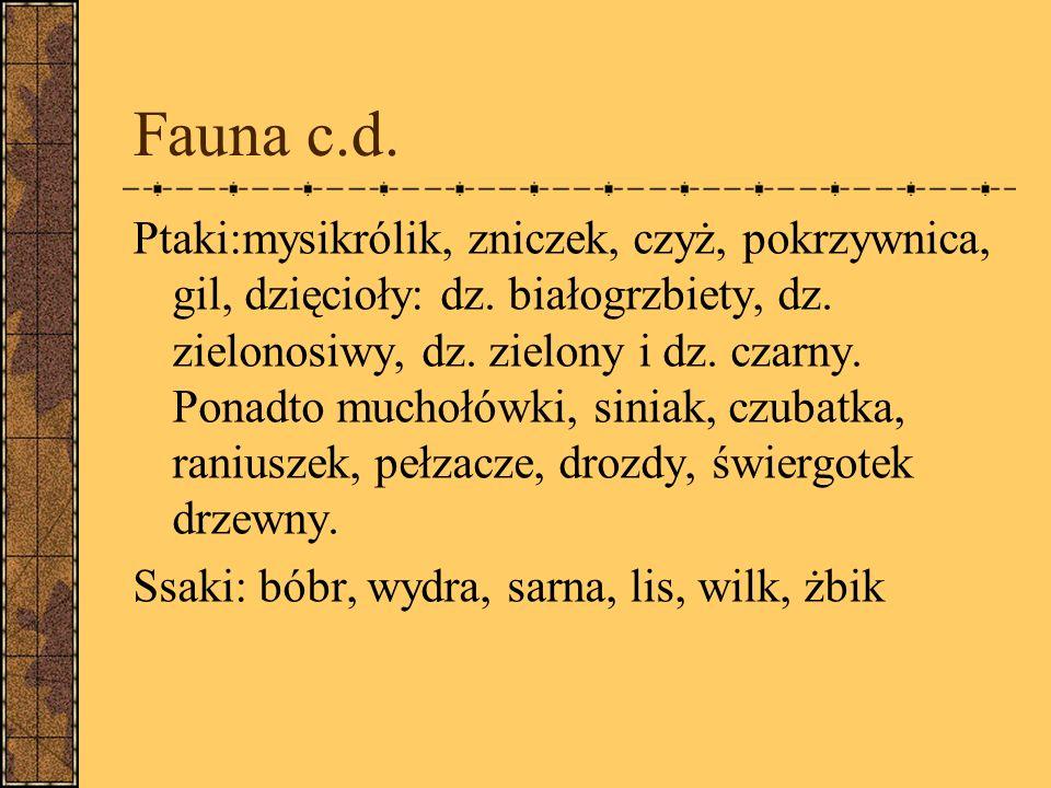 Fauna c.d.Ptaki:mysikrólik, zniczek, czyż, pokrzywnica, gil, dzięcioły: dz.