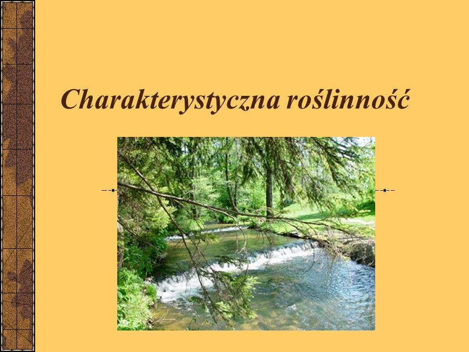 Charakterystyczna roślinność
