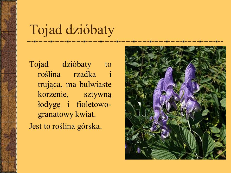 Tojad dzióbaty Tojad dzióbaty to roślina rzadka i trująca, ma bulwiaste korzenie, sztywną łodygę i fioletowo- granatowy kwiat.