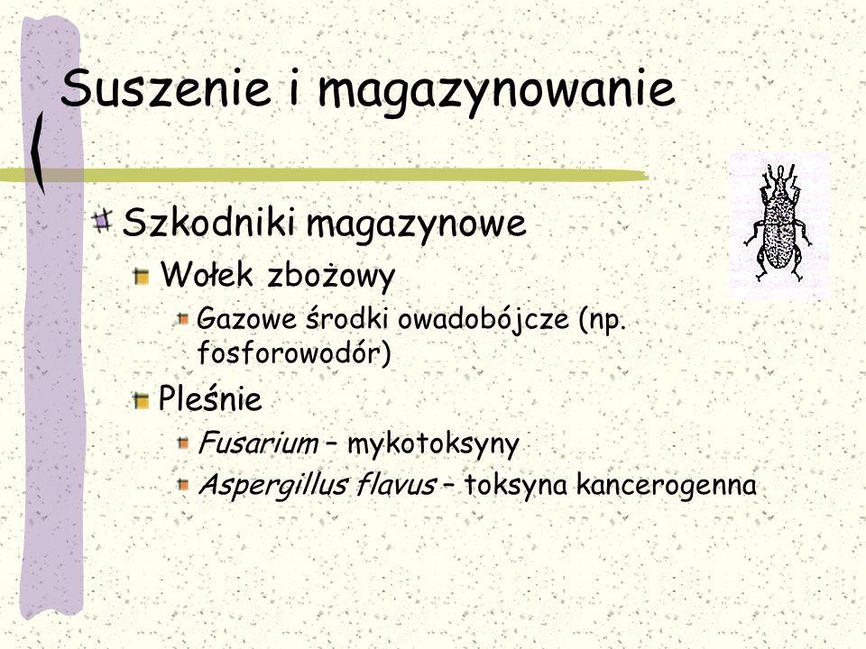 Suszenie i magazynowanie Szkodniki magazynowe Wołek zbożowy Gazowe środki owadobójcze (np. fosforowodór) Pleśnie Fusarium – mykotoksyny Aspergillus fl