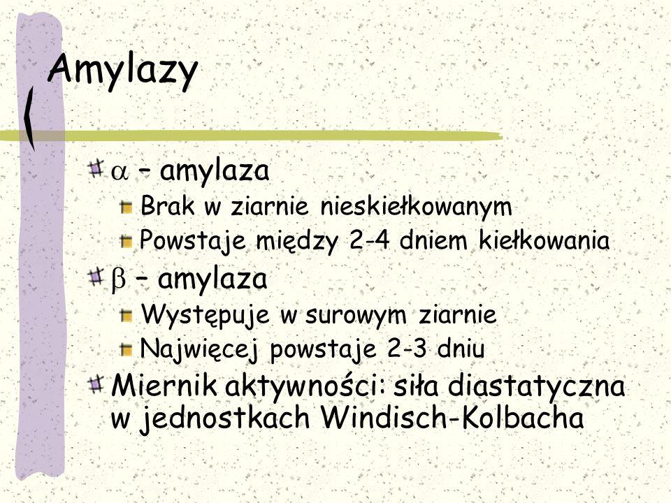 Amylazy  – amylaza Brak w ziarnie nieskiełkowanym Powstaje między 2-4 dniem kiełkowania  – amylaza Występuje w surowym ziarnie Najwięcej powstaje 2-