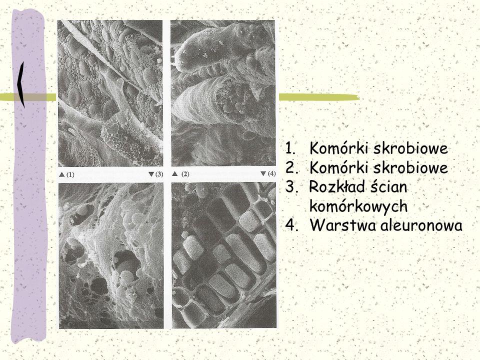 1.Komórki skrobiowe 2.Komórki skrobiowe 3.Rozkład ścian komórkowych 4.Warstwa aleuronowa