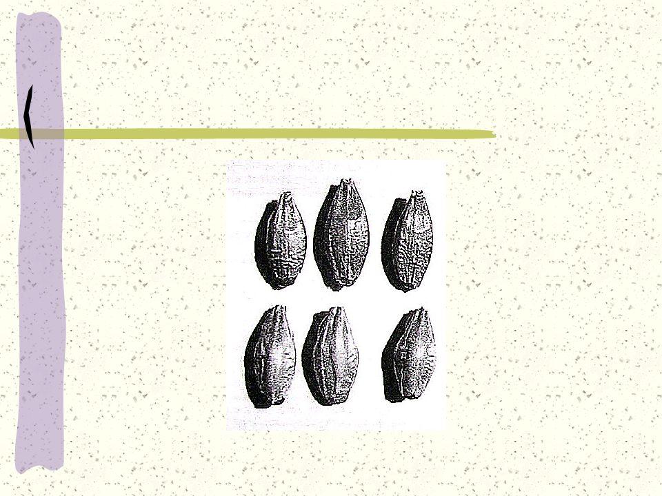 Procesy w słodowni 1.Przyjmowanie, czyszczenie i sortowanie ziarna 2.Suszenie i magazynowanie 3.Moczenie 4.Kiełkowanie 5.Suszenie słodu 6.Składowanie