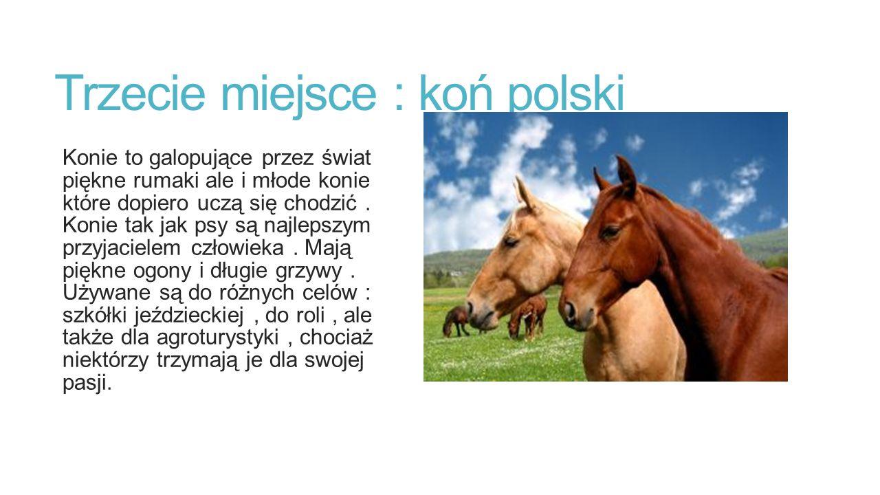 Trzecie miejsce : koń polski Konie to galopujące przez świat piękne rumaki ale i młode konie które dopiero uczą się chodzić. Konie tak jak psy są najl