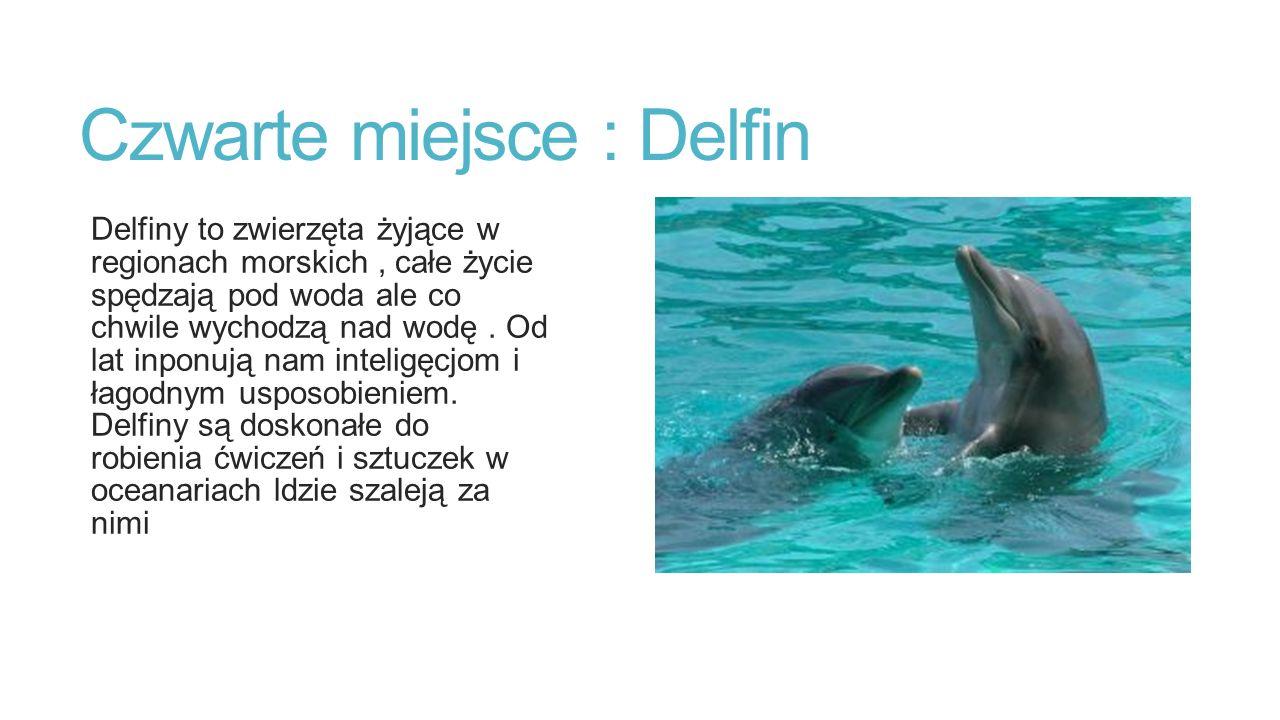 Czwarte miejsce : Delfin Delfiny to zwierzęta żyjące w regionach morskich, całe życie spędzają pod woda ale co chwile wychodzą nad wodę.