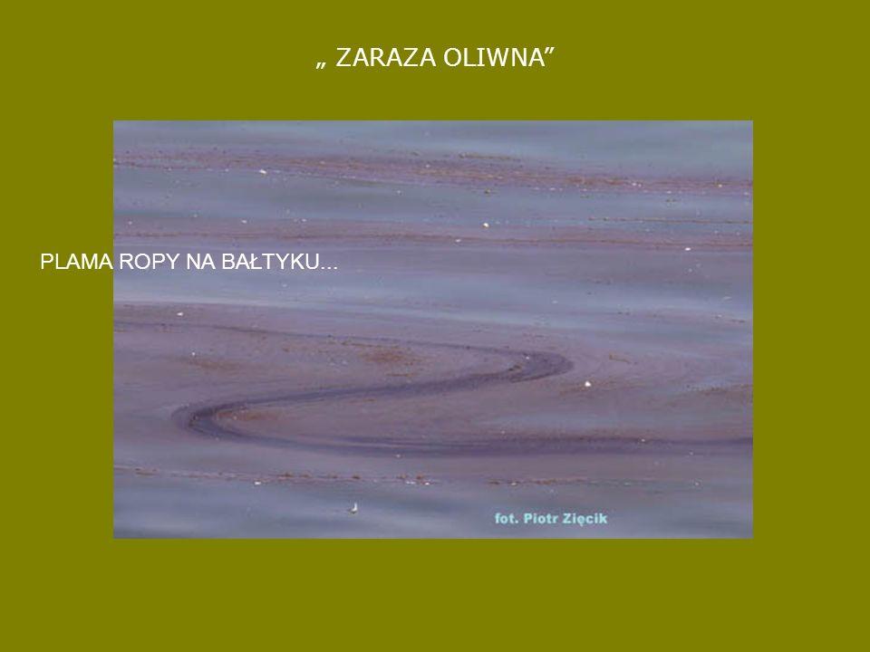 Martwa alka znaleziona 19.02.2007 we Władysławowie PRZYKŁAD WYCIEKU ROPY NA ZATOCE GDAŃSKIEJ – LUTY 2007 I JEGO KONSEKWENCJE...