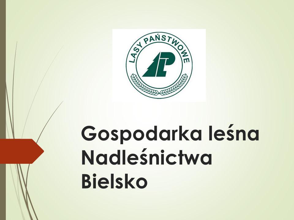 Gospodarka leśna Nadleśnictwa Bielsko