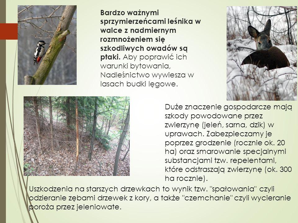 Bardzo ważnymi sprzymierzeńcami leśnika w walce z nadmiernym rozmnożeniem się szkodliwych owadów są ptaki. Aby poprawić ich warunki bytowania, Nadleśn