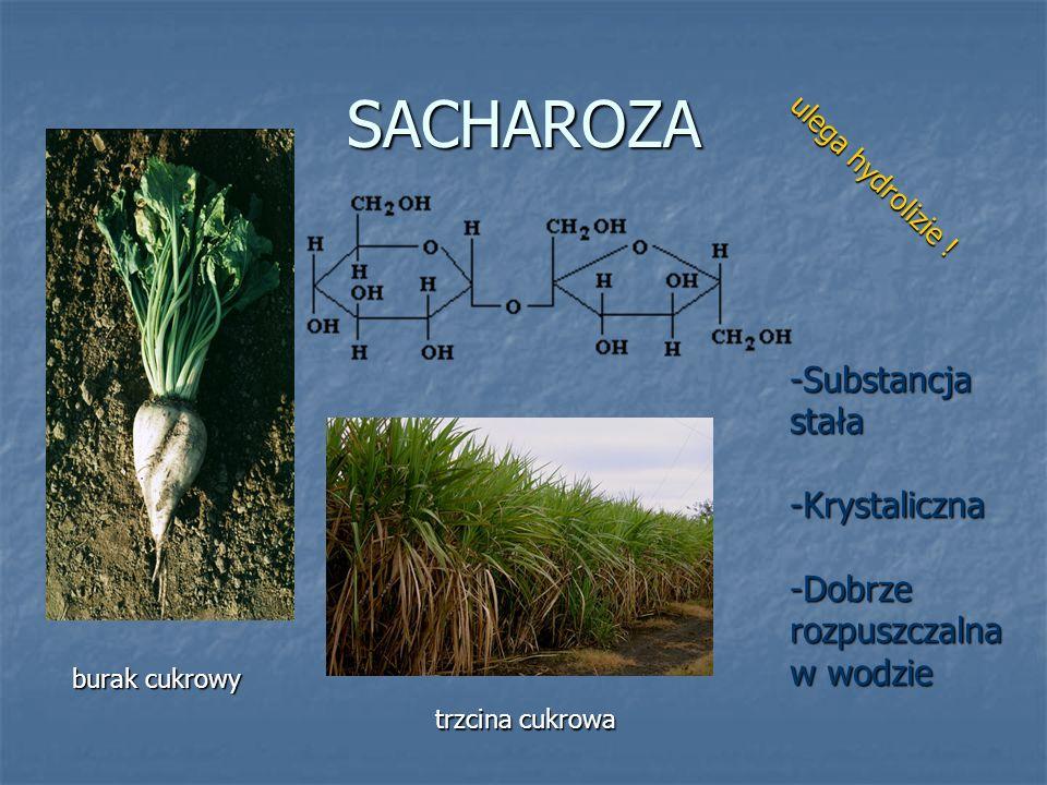 SACHAROZA burak cukrowy trzcina cukrowa -Substancja stała -Krystaliczna -Dobrze rozpuszczalna w wodzie ulega hydrolizie !