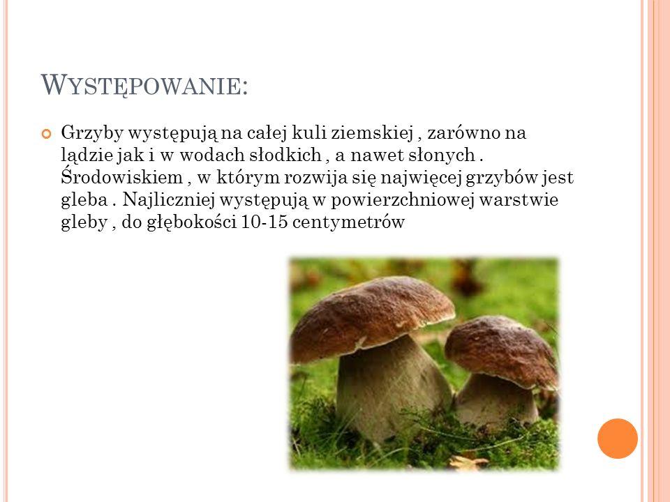 R OZWÓJ : Dla rozwoju grzybów niezbędna jest odpowiednia wilgotność.