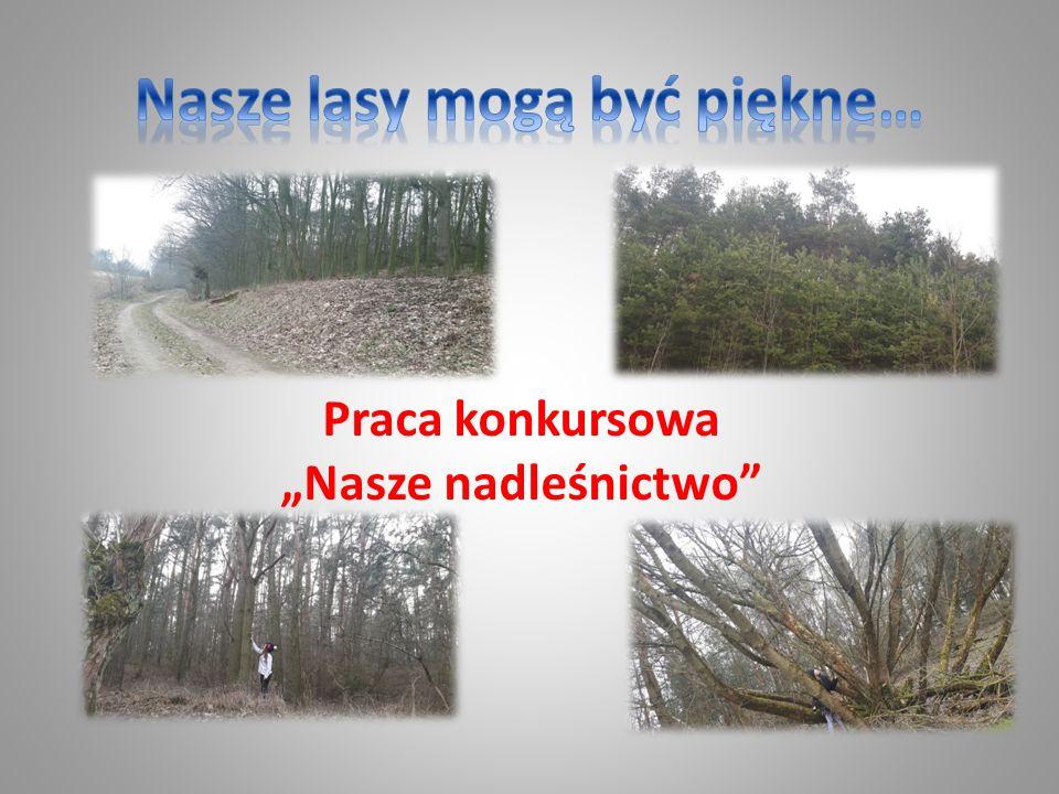 Nasze lasy należą do Nadleśnictwa Pniewy w powiecie szamotulskim i częściowo nowotomyskim, województwo wielkopolskie.