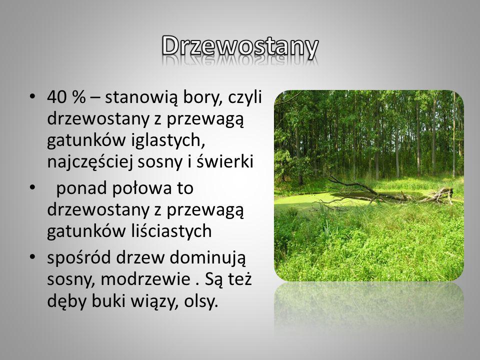 W granicach Nadleśnictwa Pniewy znajduje się fragment Sierakowskiego Parku Krajobrazowego